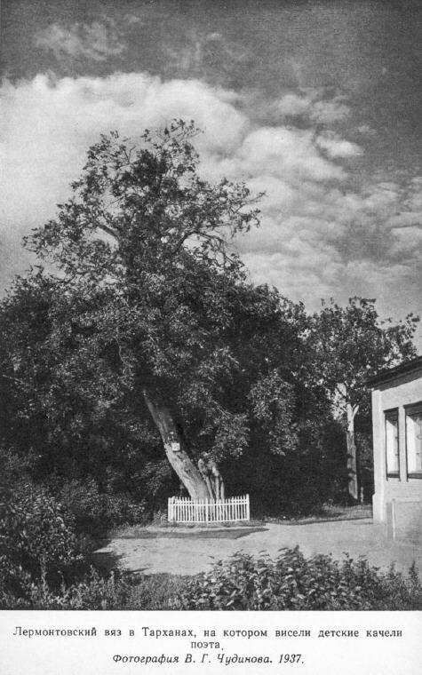 Лермонтовский вяз в Тарханах, на котором висели детские качели поэта